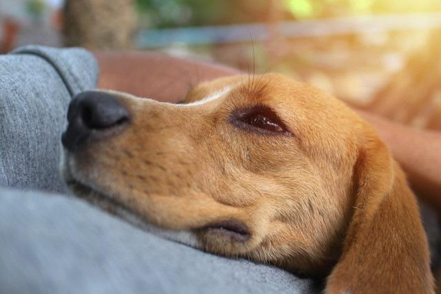 なぜ犬は寝るときにくっついてくるの?