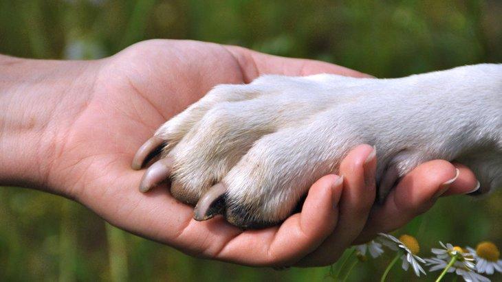 犬を見た目だけで飼うべきではない3つの理由