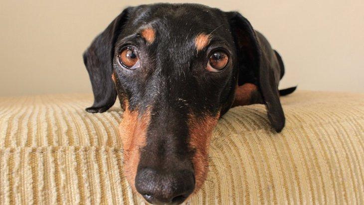 「出かける前には犬を無視」はもう古いかもしれないという研究結果