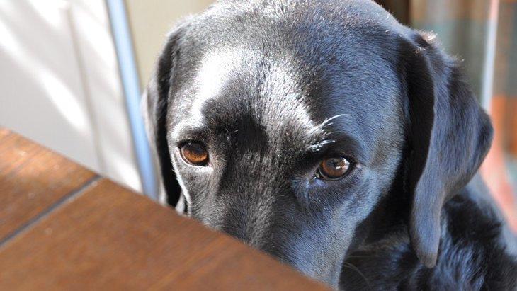 犬が人を噛んだ後に舐めてくる心理5つ!あまりいい意味ではないって本当?
