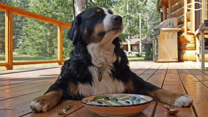 """""""美味しくない…""""って思われてるかも。愛犬のごはん、正しく保存できてますか?"""