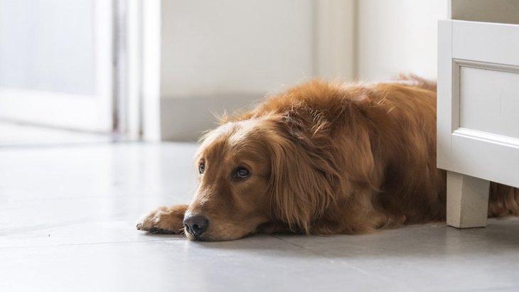 犬が『ヤキモチ』をやいているときの仕草5つ!嫉妬するシチュエーションとは?