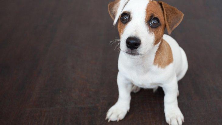 ついやってるかも?愛犬との生活で気を付けたい『5つのミス』