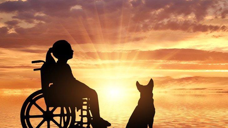 犬と子供の骨肉腫がとてもよく似ていることが研究で明らかに