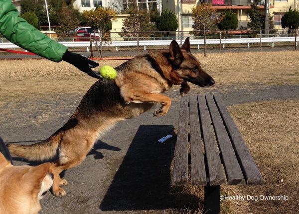 犬が好きすぎてドッグトレーナーになっちゃった話