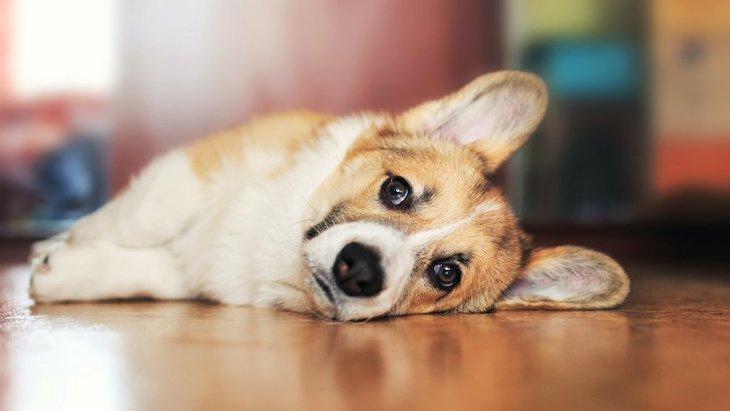 犬が幸せになれないNGな飼い方5つ