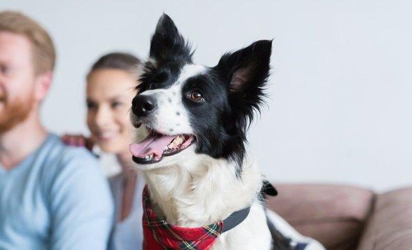 犬がテレビをじっと見ている時の心理4選!ワンコは内容を理解しているの?