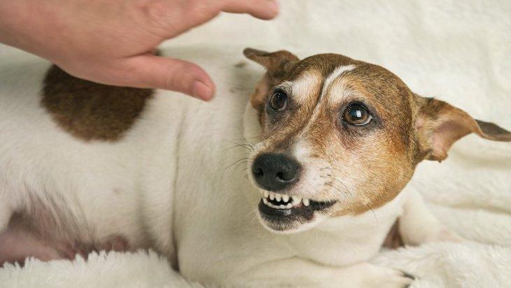 犬が『信用してない人』にする仕草や行動5選