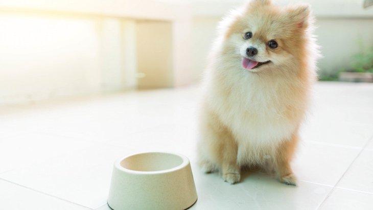 犬にとって「脂肪酸」は大切な栄養素!効果効能と摂取方法