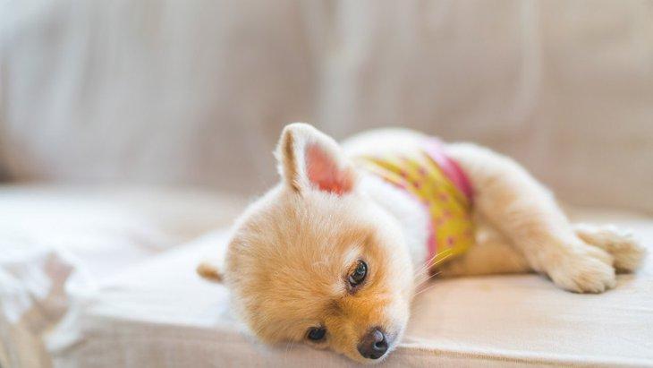 犬が痙攣を起こす原因4つ