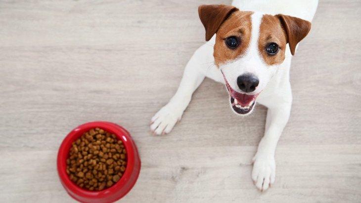 愛犬の健康のために、ペットフードの取扱いで気をつけたいこと4つ