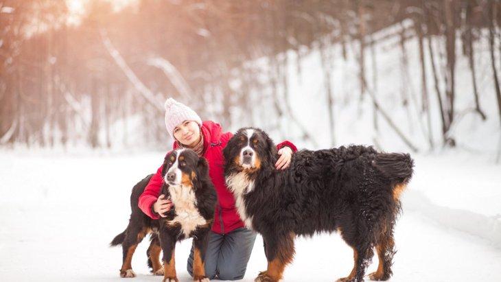 モフモフ♡毛並みが柔らかな5つの犬種