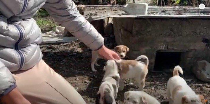 【野良犬支援】なんて幸せな光景♡8匹の野良子犬たちとお近づきに…♪