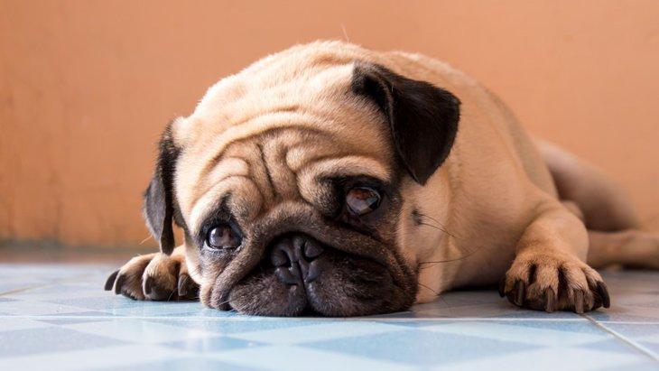 暑さが原因で引き起こされる犬の4つの体調不良