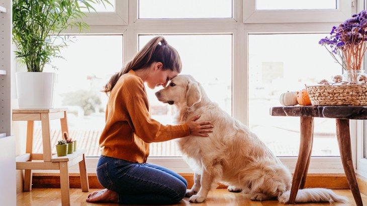 家に帰ったら犬に構ってはいけない?!本当はどうするのがいいの?