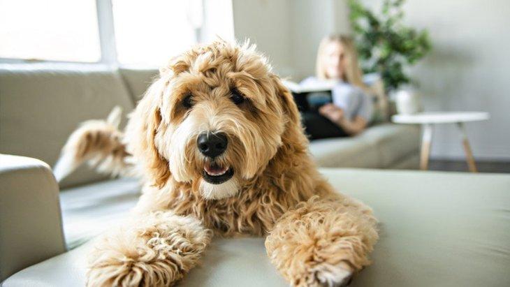 犬が孤独を感じてしまうシチュエーション3選!問題行動に繋がることも…?