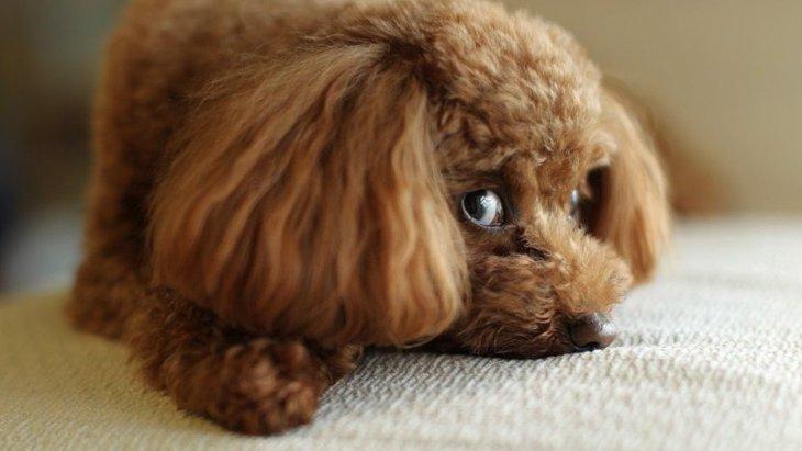 犬が『楽しくない』と感じている時にする仕草や態度5選