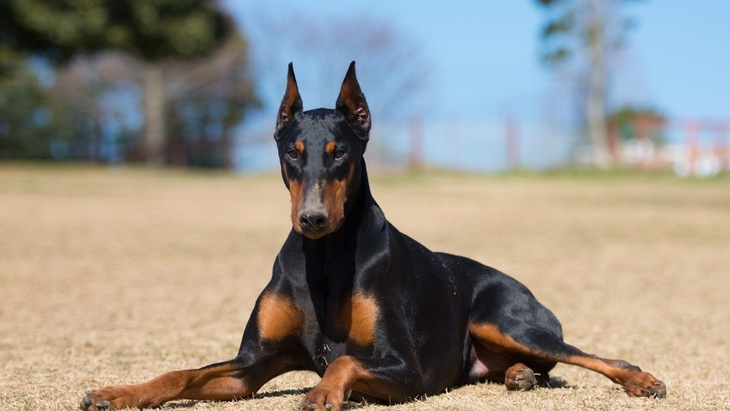 犬の筋肉の役割とは?人間との比較まで