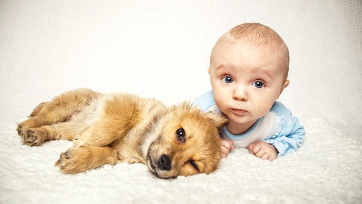 """犬にもある""""赤ちゃん返り""""!5つの症状と4つの原因"""