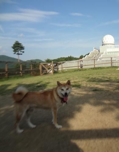 富士山が見える「道の駅富士吉田のドッグラン」で愛犬とリフレッシュ!