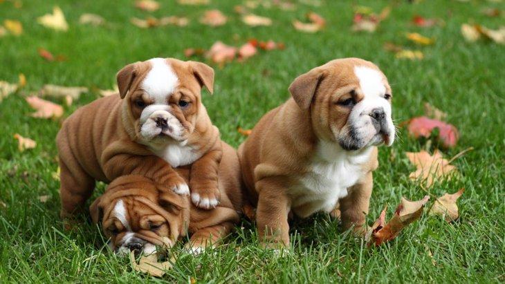 犬が季節性膁部脱毛症になる原因や症状、治療法から予防法まで