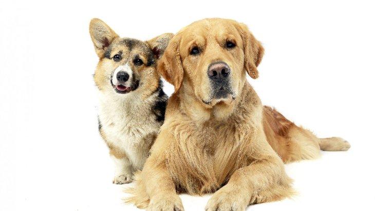 あなたは使ってない?犬が傷つく『NGワード』2選!