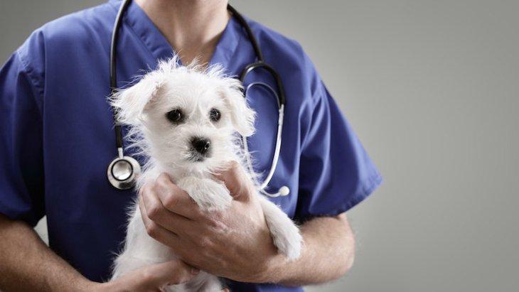 本当に毎年必要?犬の混合ワクチンについて