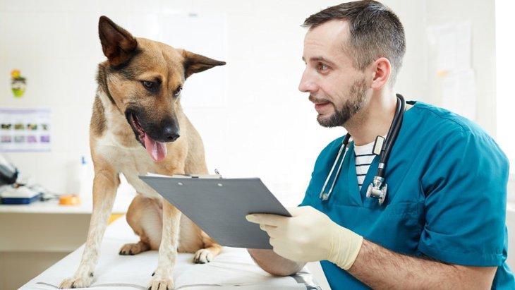 犬の癌の3つの治療法とそれぞれの費用