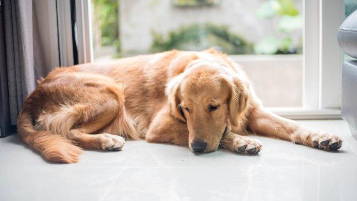犬が草を食べる4つの心理