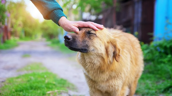 犬が行動療法を受けた時に成果を左右する要素とは何か?という研究結果