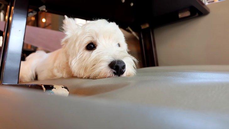 愛犬とドッグカフェに行くときのマナーや注意点