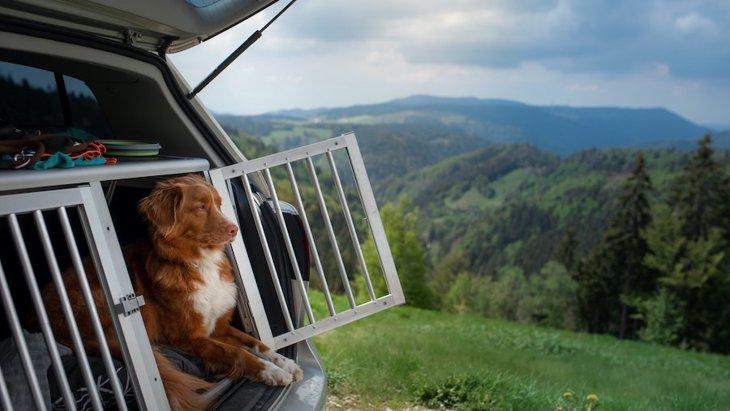 犬と車中泊は可能?持ち物やおすすめのグッズ、サービスまで