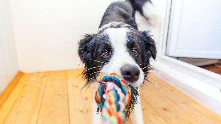 愛犬とお散歩に行けないときにできるストレス発散法3つ