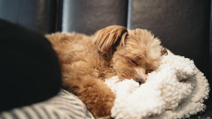 犬に毛布を使うべきシチュエーションと注意すべきポイント