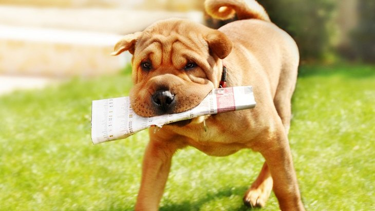 犬は自発的に人間を手伝おうとするだろうか?という研究結果