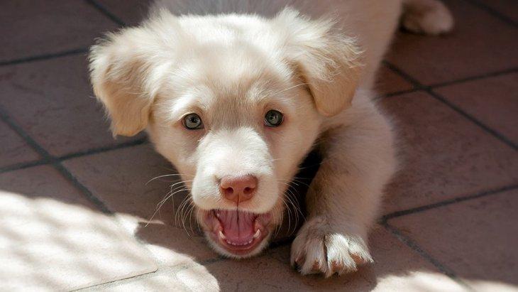 犬が唸るのはなぜ?ケース別の気持ちや行動の理由、しつけや対処法