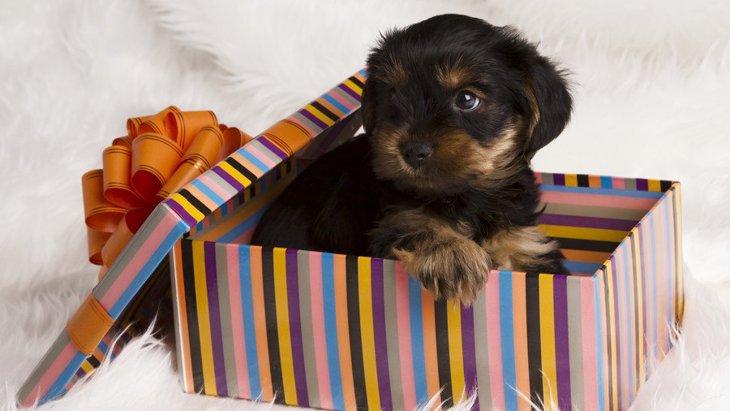 【あるある】犬につい衝動買いしてしまうもの5選
