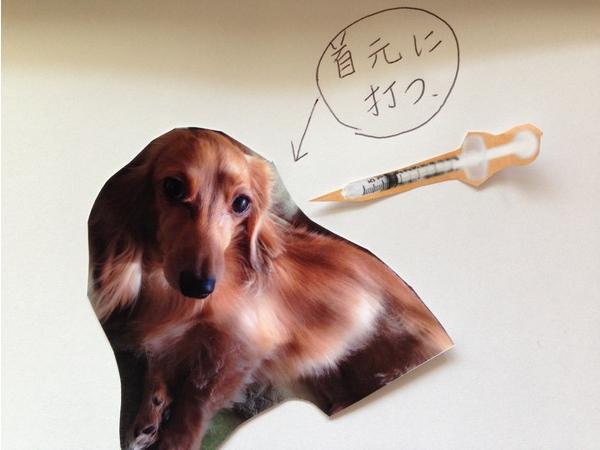 犬の糖尿病の症状・原因・治療法について