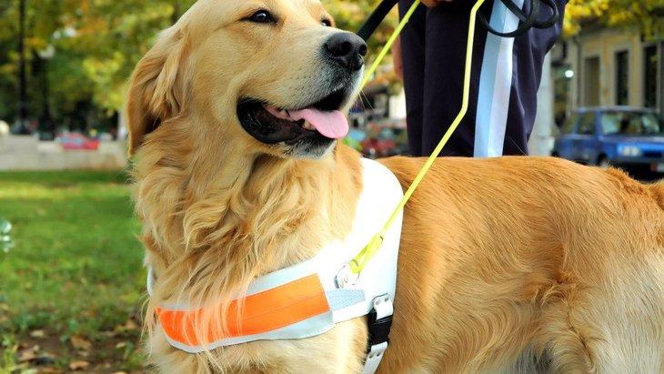 パンデミック下で米国の盲導犬育成団体が子犬達のために工夫していること