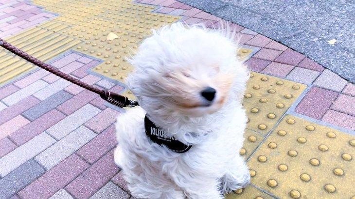 「動かん…ぞ!」強風に煽られても己の意思を貫き通す犬さんが話題!