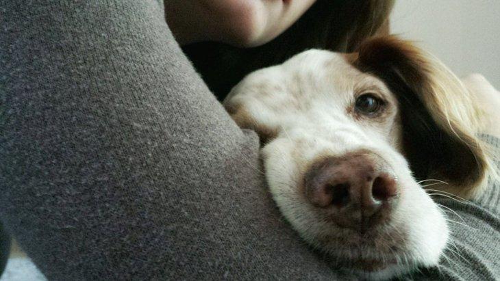 足が不自由な犬との生活で気を付けたいこと