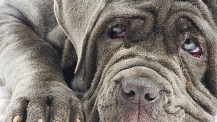大型犬には特に注意。ウォブラー症候群について