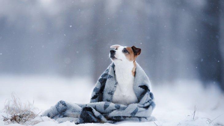 冬に注意したい犬の健康管理と家庭でできる対策