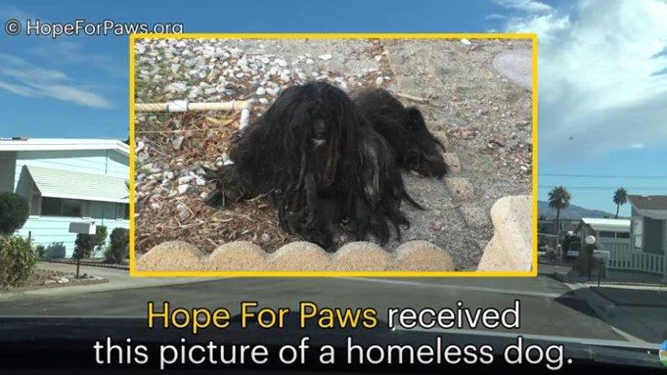 ほとんど妖怪…2年以上の路上生活からのレスキューでまるで別犬!
