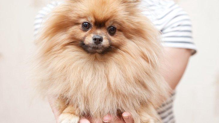 滑りやすいフローリングが犬に与える影響と対策