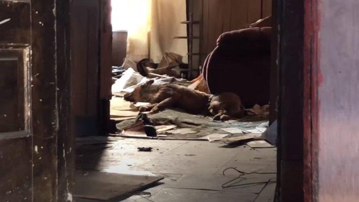 廃屋に隠れていた犬の親子。穏やかな母犬も、子犬のためには強くなる!