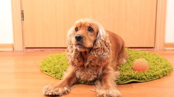 犬を知人に預ける際の注意点とマナー