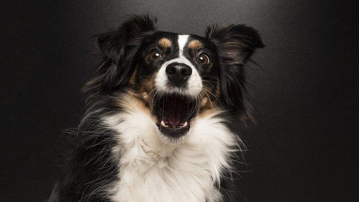 犬が留守番中に吠える!理由やしつけ方、無駄吠え防止グッズまで