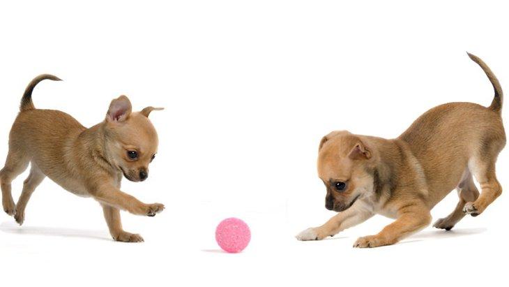 犬を初めて飼った人が陥りやすい5つの間違った飼い方