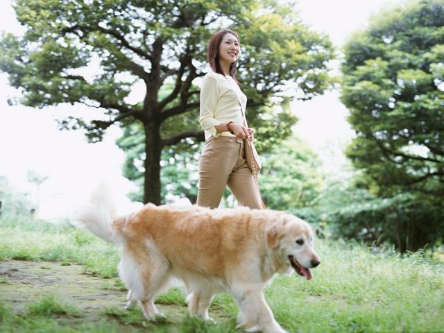 犬の飼い主資格制度~スイスやドイツの法律から学ぶ事~